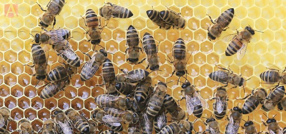 Foto principal ¿Qué pasaría si las abejas se extinguieran - ¿Qué pasaría si las abejas se extinguieran?