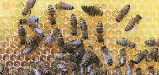 Foto principal ¿Qué pasaría si las abejas se extinguieran 520x245 - ¿Qué pasaría si las abejas se extinguieran?