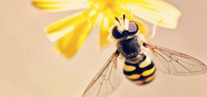 publicar imagen ¿Qué pasaría si las abejas se extinguieran La desaparición de las abejas es real 300x141 - ¿Qué pasaría si las abejas se extinguieran?